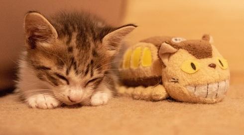 cat-top.jpg
